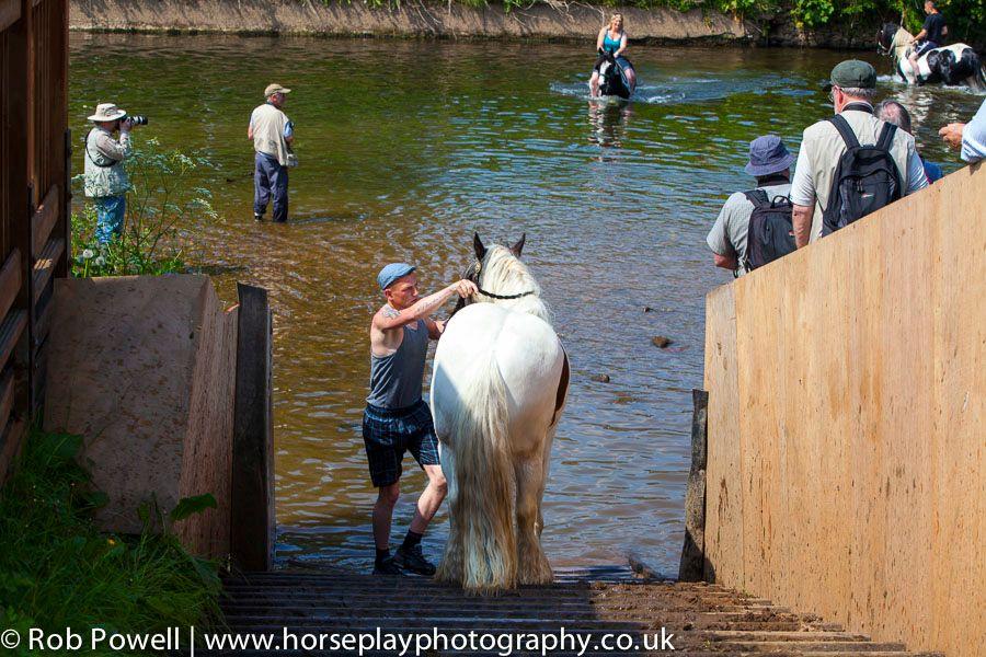 Appleby-Horse-4994