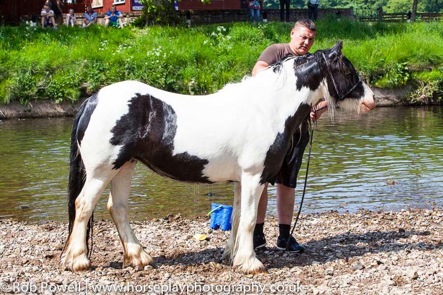 Appleby-Horse-5000