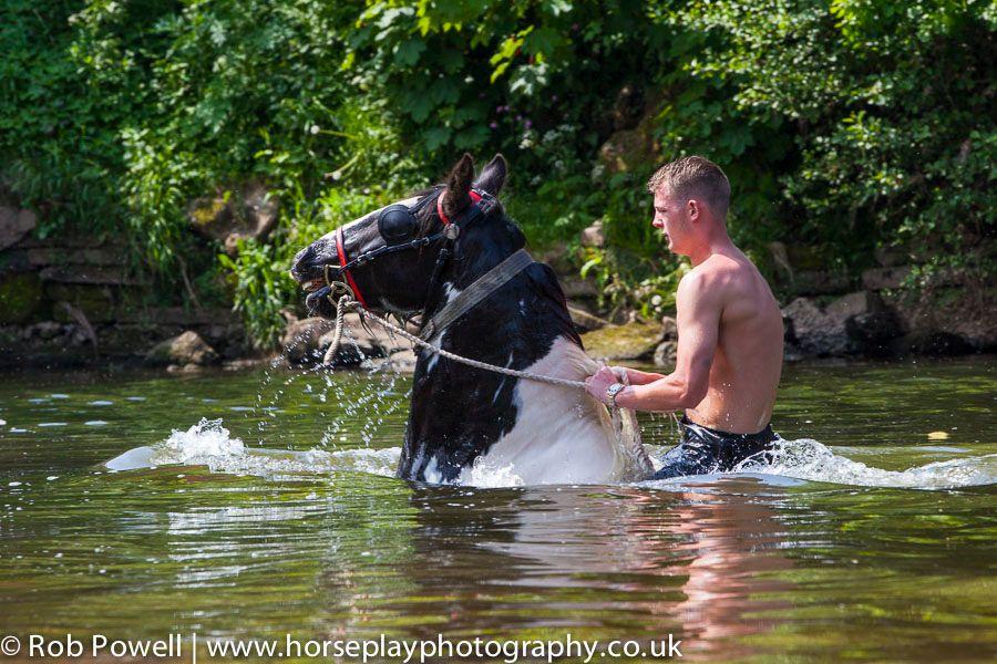 Appleby-Horse-5019