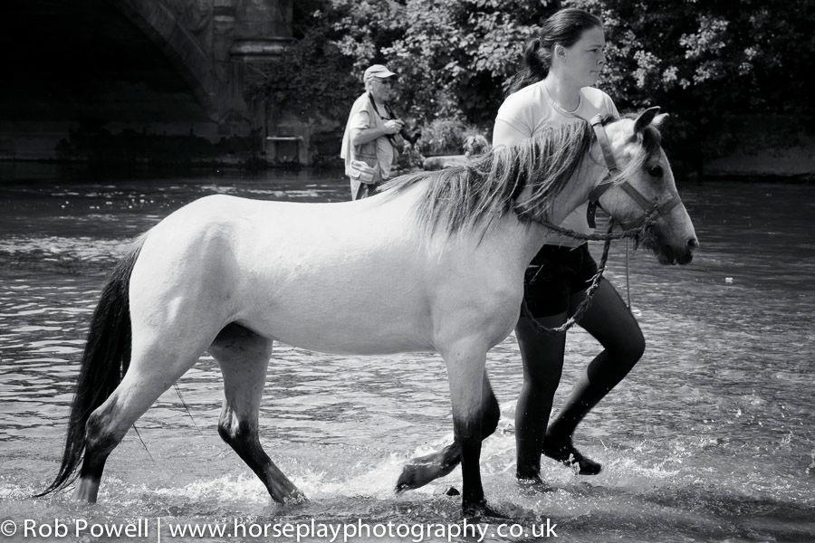 Appleby-Horse-5051