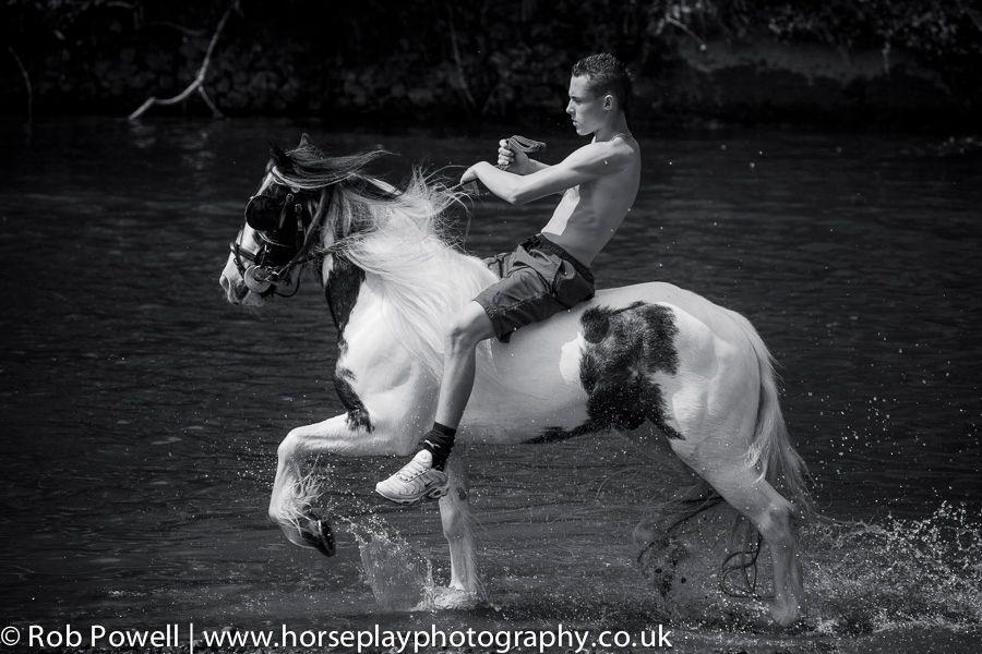 Appleby-Horse-5196