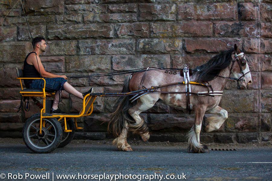 Appleby-Horse-5311
