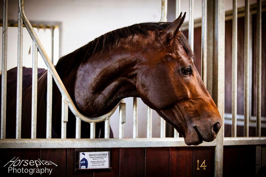 horse-racing-glorious-goodwood-cup