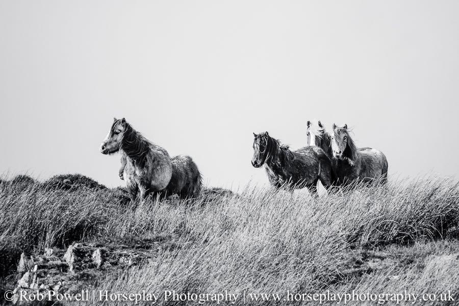 Carneddau-Ponies-0820