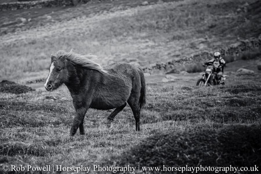 Carneddau-Ponies-0849