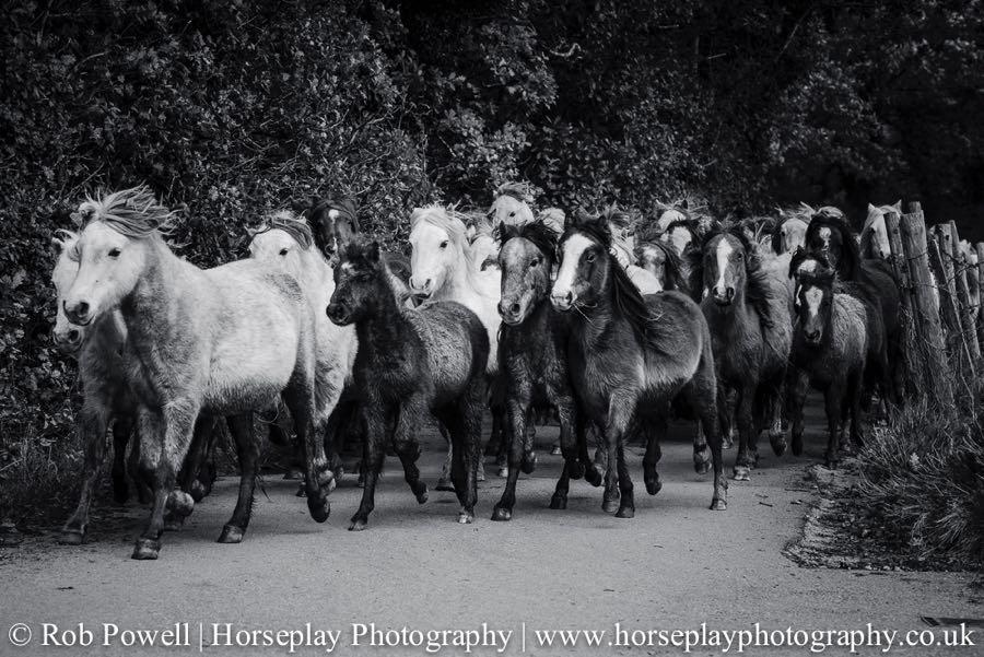 Carneddau-Ponies-0892