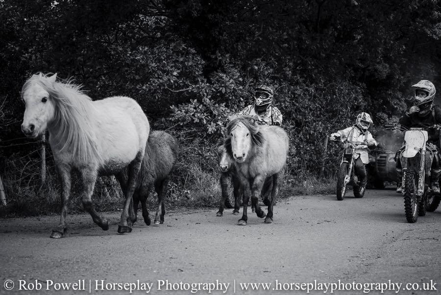 Carneddau-Ponies-0917