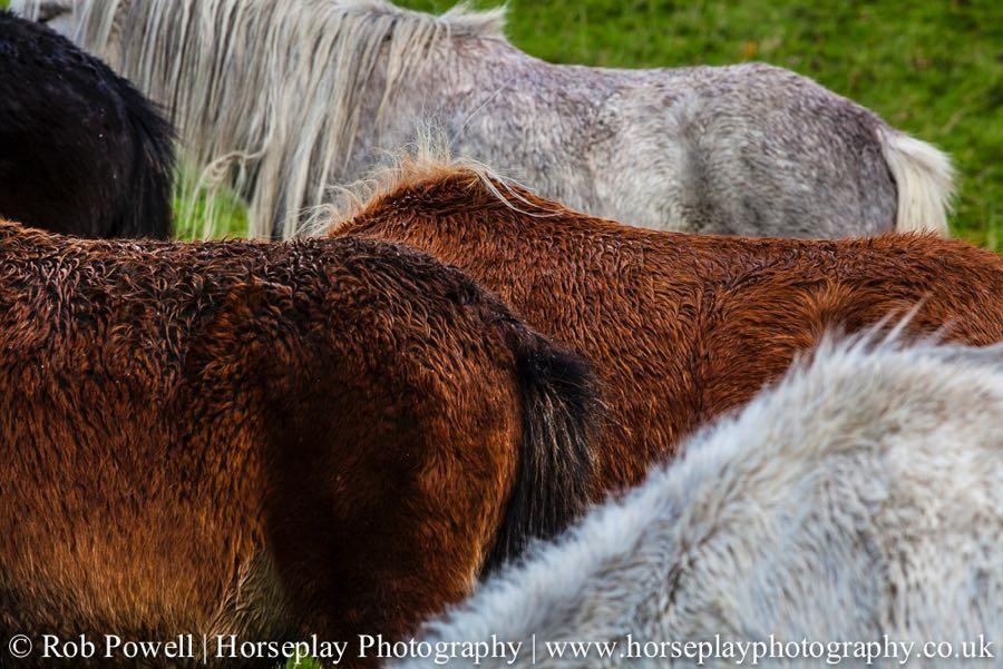 Carneddau-Ponies-0969