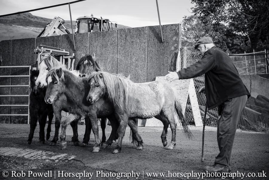 Carneddau-Ponies-1048