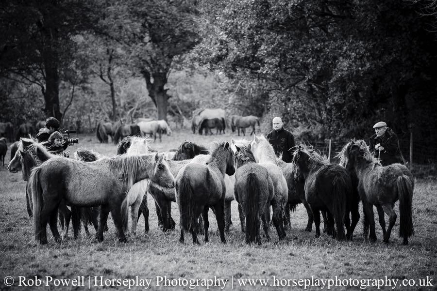 Carneddau-Ponies-1078