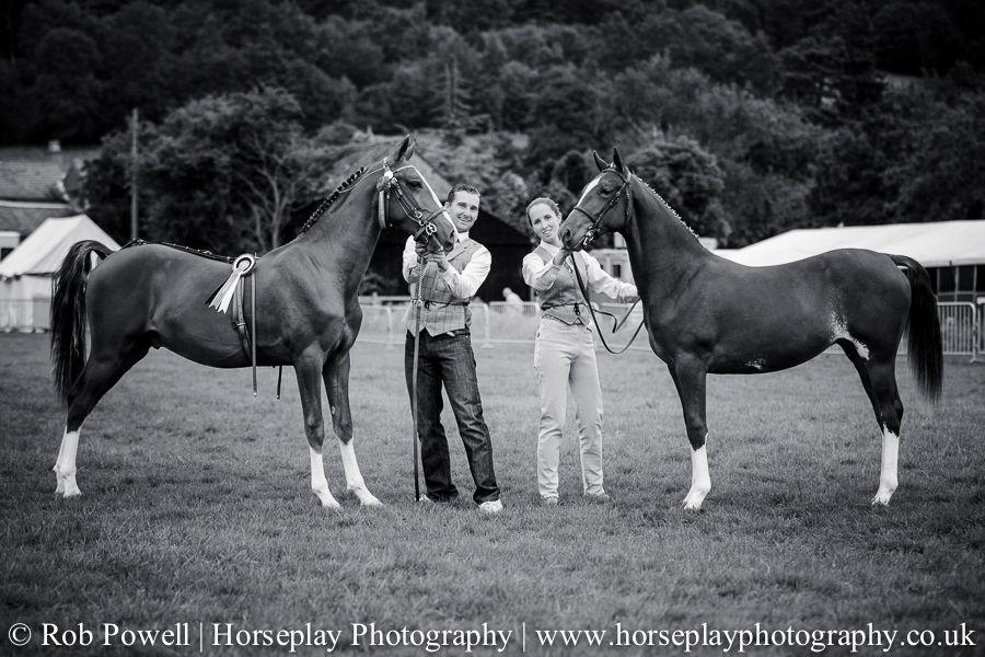 hackney-horse-0101