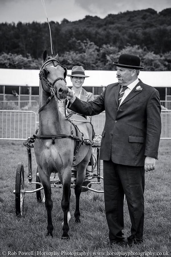 hackney-horse-0188