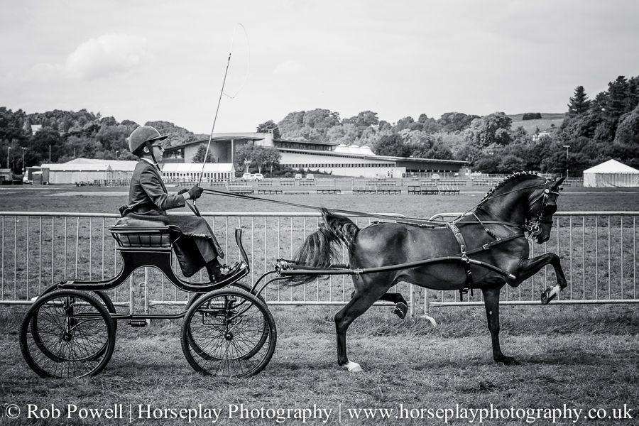 hackney-horse-0674