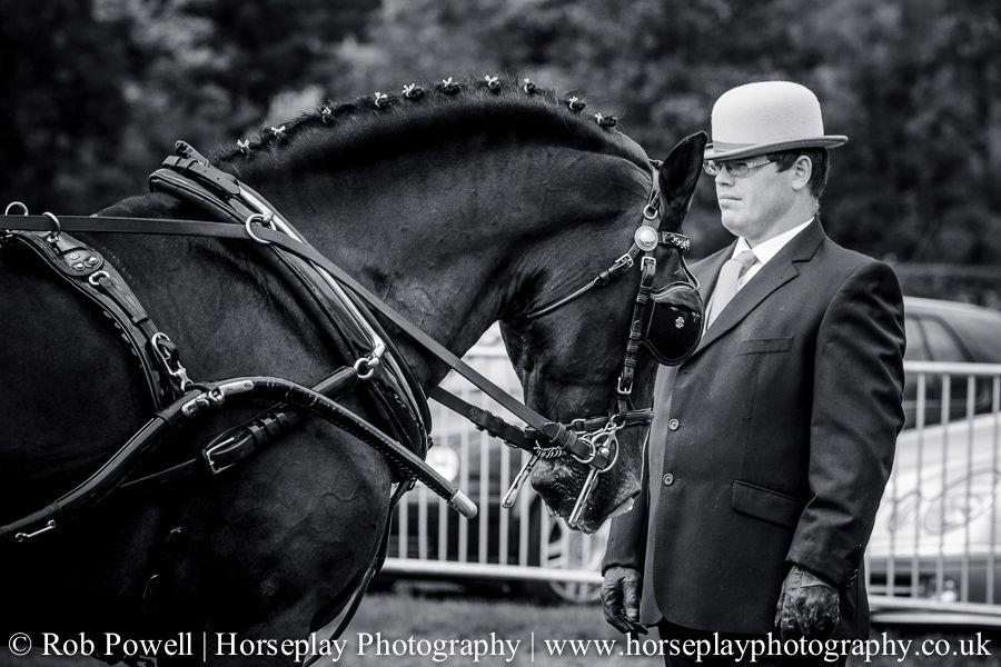 hackney-horse-0808