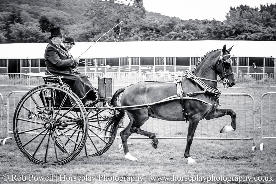hackney-horse-0925
