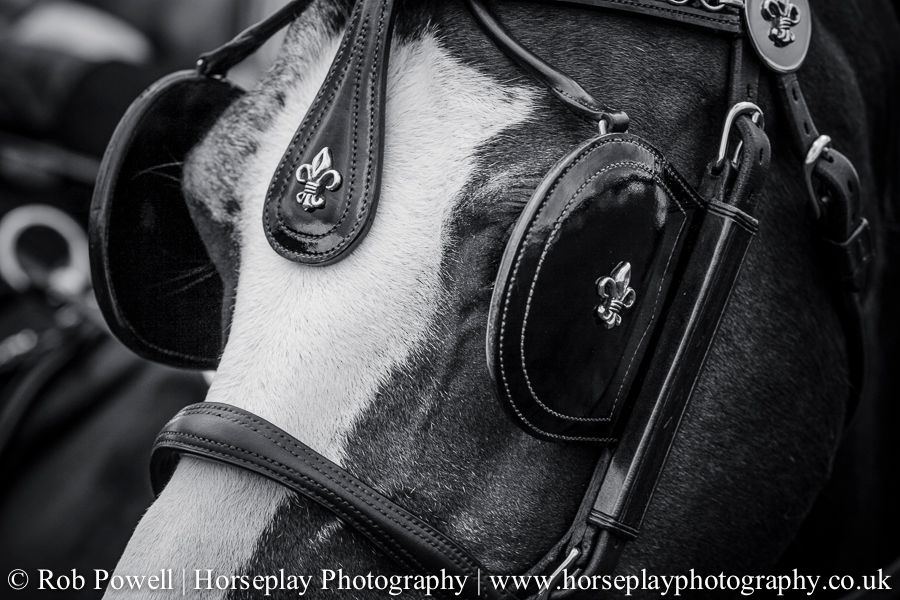 hackney-horse-1044