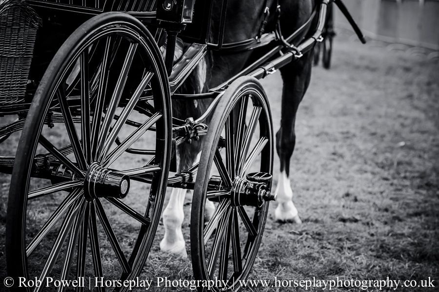 hackney-horse-1077