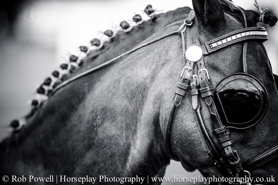 hackney-horse-1527