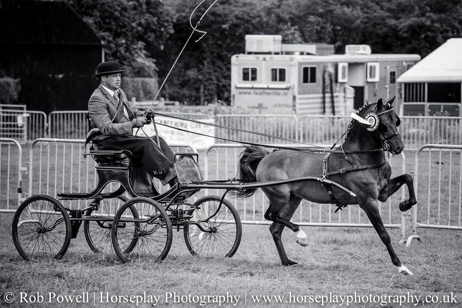 hackney-horse-1589