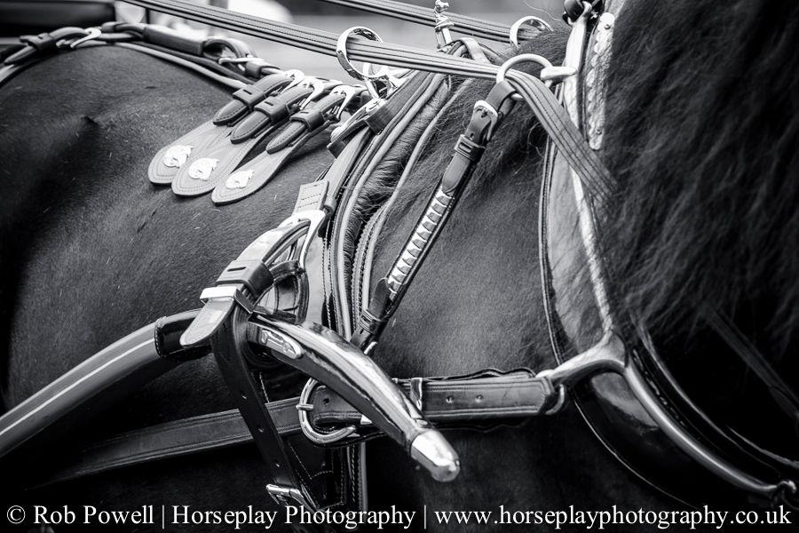 hackney-horse-1688