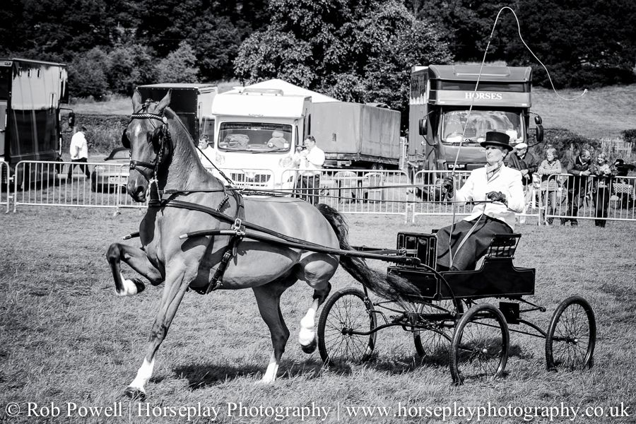 hackney-horse-1947