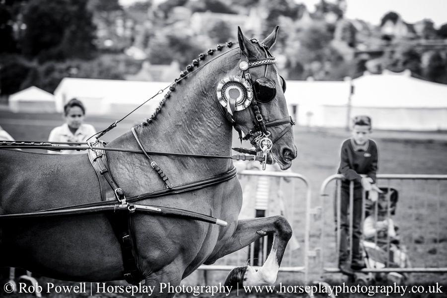 hackney-horse-2051