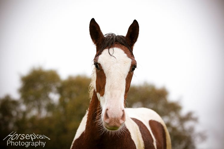 horseplay--3