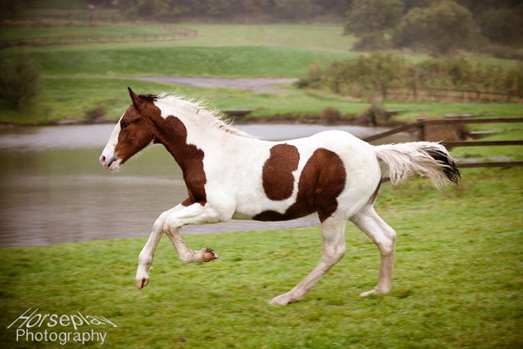 horseplay--4