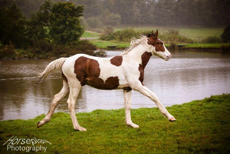 horseplay--6