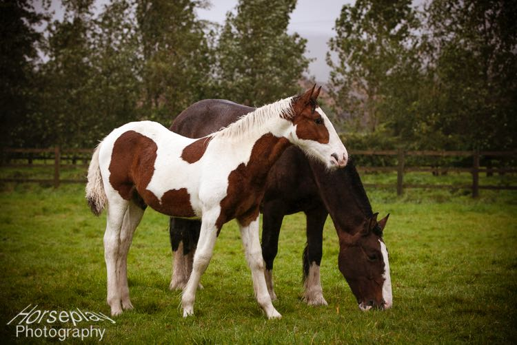 horseplay-